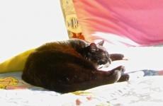 Moonface sleeps in the sun
